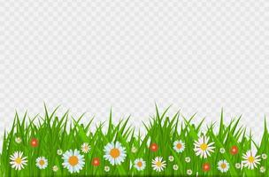 BrighGrass and flowers border, greeting card decoration element for Easter on a Transparent Background. Vector Illustrationt Juicy Green Grass on a Transparent Background. Vector Illustration.