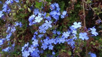 Summer Flowers In The Garden Footage video