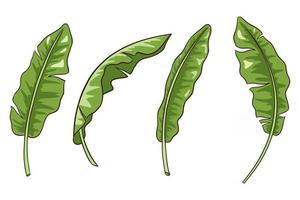 Hand Drawn Banana Leaves Vector Isolated Elements Collection