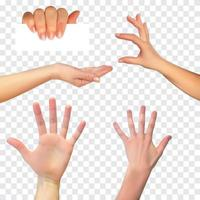 Realistic hand set on White Background. Vector Illustration