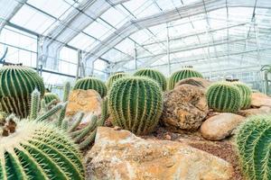 Hermoso cactus en el jardín en el jardín botánico queen sirikit chiang mai, tailandia foto