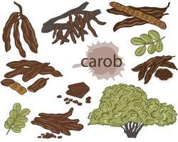 Set of carob vector