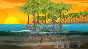 Mangrove forest landscape scene at sunset time vector
