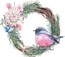 Pink Robin illustration painted with watercolor vector