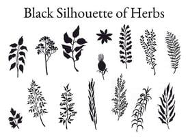 Vector black silhouette illustration set of herbs, plants and flowers. Hand drawn graphic sketches for you design