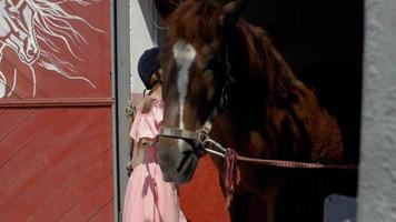 una niña limpia un caballo marrón con un paño húmedo video