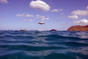 delfines saltando fuera del agua foto