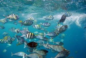 Small grouping of fish just underwater photo