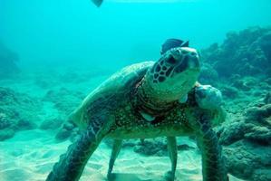 Turtle on the ocean floor photo