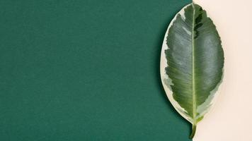 Top view beautiful plant leaf with copy space. High quality beautiful photo concept