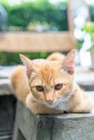 Close-up cute orange baby cat photo