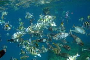 School of fish feeding near the waters surface photo