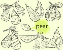Pear sketch set vector
