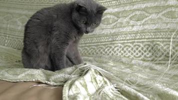 um gato brinca com fios video