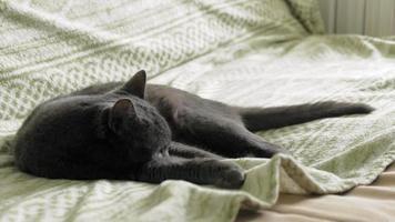 gato adormecido abana o rabo video