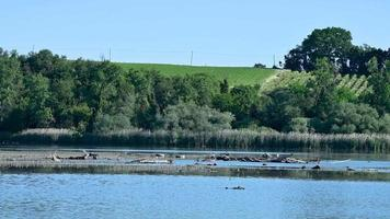 lake of narni with birds video