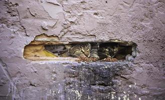 Stray cat on a wall photo