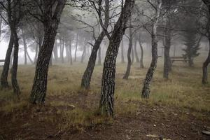 bosque oscuro en la niebla foto