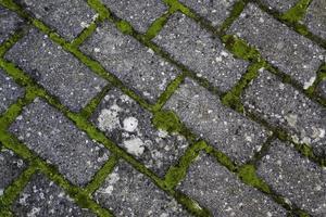 piso de adoquines con musgo foto