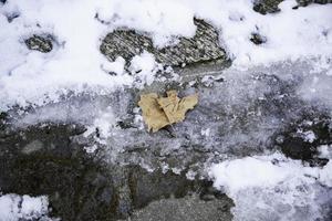 hoja seca congelada en la nieve foto
