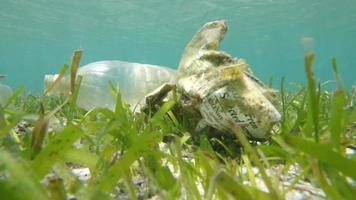 Marine plastic pollution garbage in ocean video