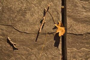 Leaf next to wood. Still life of nature in city photo