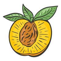 Half peach vector, healthy organic natural food vector