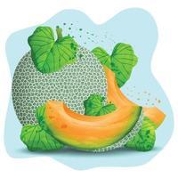 rodajas de melón fresco vector