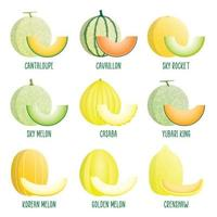 Set of Melon Icons vector