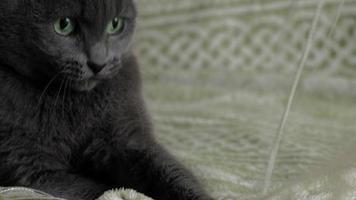 gato brinca com fios em casa video