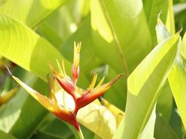 Decoration for tropical gardens with natural flowers photo