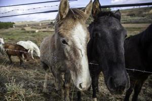 caballos en una granja foto