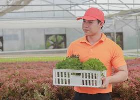 Asian delivery man holding a basket of fresh vegetables and organic vegetables from the farm. Vegetable cultivation and hydroponics. Health concept for agriculture photo