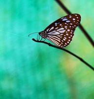 Beautiful butterfly in the garden photo