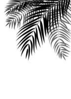 Palm Tree Leaf Silhouette Background Vector Illustrat
