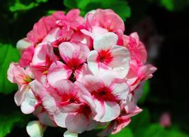 flores para un hermoso día de amor joven foto