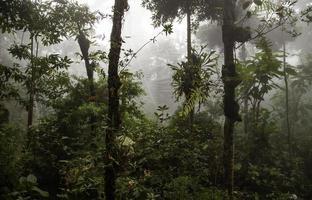 selva con niebla foto
