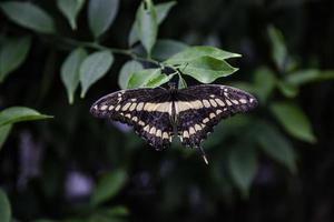 Butterfly garden in nature photo