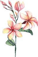 plumeria with watercolor 2 vector