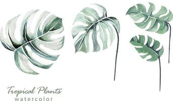Watercolor painted botanical 1 vector