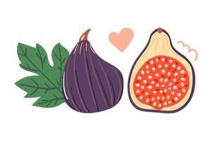Hand drawn figs fruit, flat design. vector