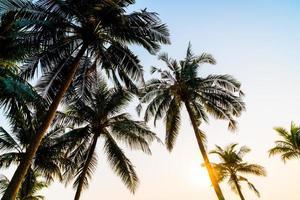 Hermosa palmera de coco con puesta de sol en el cielo crepuscular foto