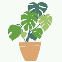 Simplicity monstera plant freehand drawing flat design. vector