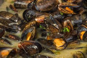 Fresh shells in wine photo