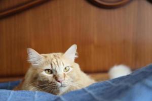 lindo gato joven foto
