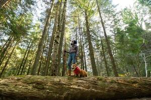 Young woman traveler with corgi dog in the mountains photo