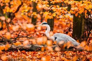 Close up of wild bird photo