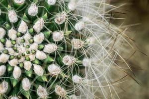 macro de cactus de cerca foto