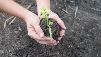 femme main tenir la plantation d'un arbre dans le sol du jardin. plante femelle petit jeune arbre à la main le matin. écologie des environnements forestiers, jour de la terre et nouveau concept de vie. ralenti video