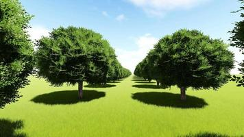 Moving inside a corridor of trees on a green field video
